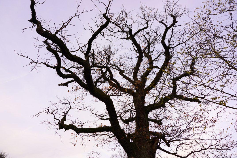 tree-1034194